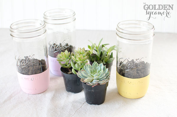 painted mason jar succulent planter, container gardening, crafts, flowers, gardening, mason jars, painting, repurposing upcycling, succulents