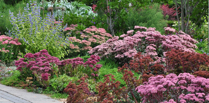 Different varieties of sedums  can be mixed to great effect.