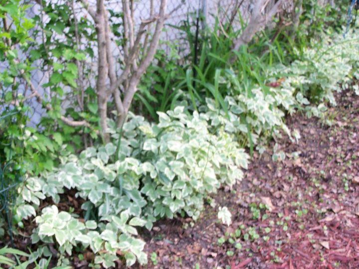 great groundcovers, flowers, gardening, landscape, raised garden beds