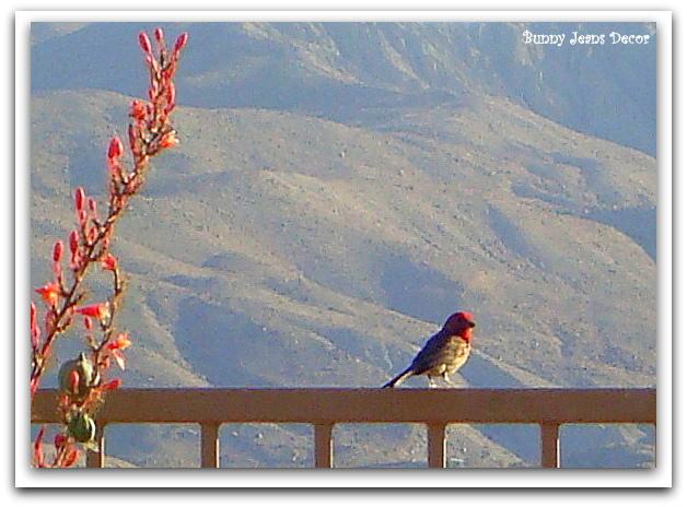 birds in my yard, gardening, pets animals