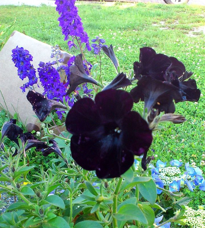 black flower, i belive it could be tabak...tobacco? i do not know the english word....(-: