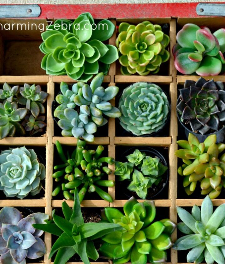 "Variety of real (and ""faux"") succulents."