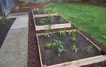 Do You Have to Know What You're Doing to Plant a Vegetable Garden?