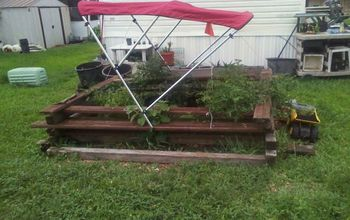 more of my garden, gardening, terrarium, garden update