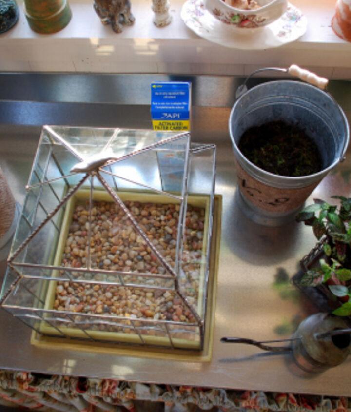 gardening under glass, gardening, terrarium