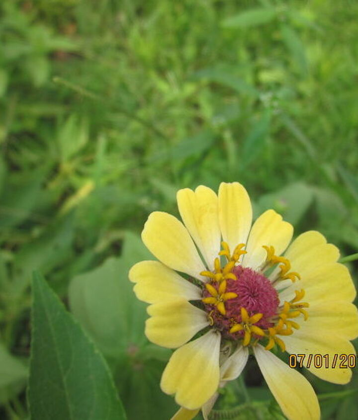 spring and summer blooms, flowers, gardening