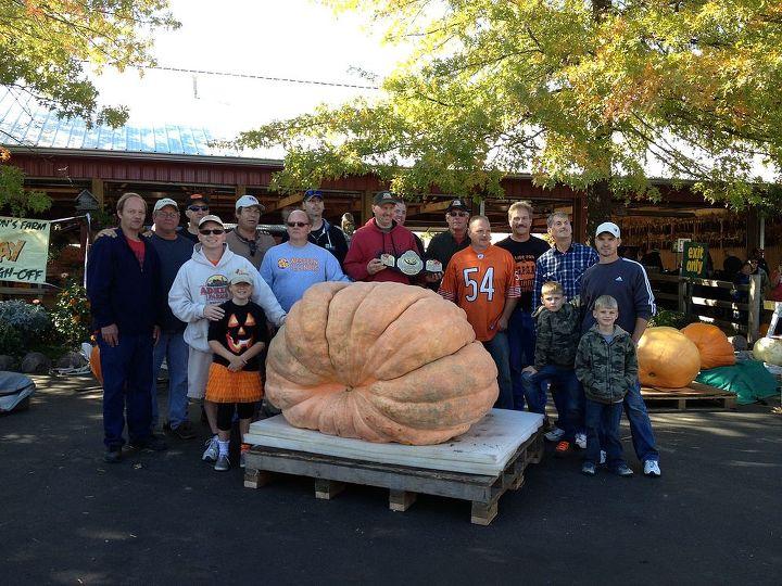 The winning pumpkin at our weigh-off 1479lbs!