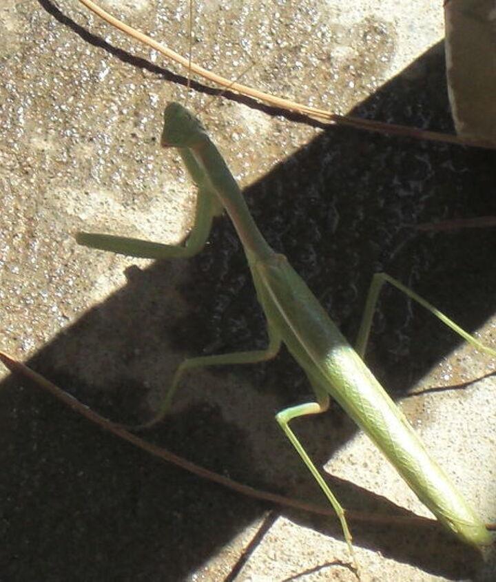 my morning visitor, gardening, pets animals