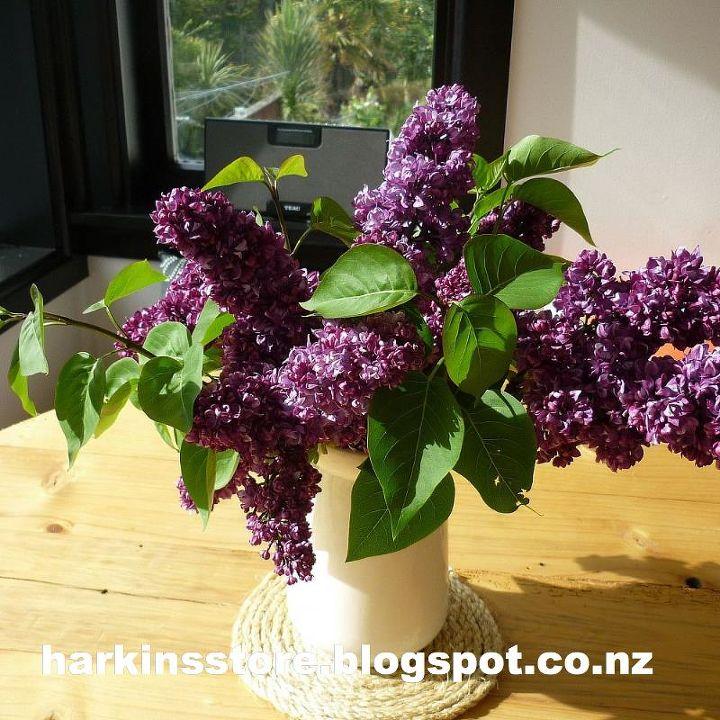 lilac, gardening