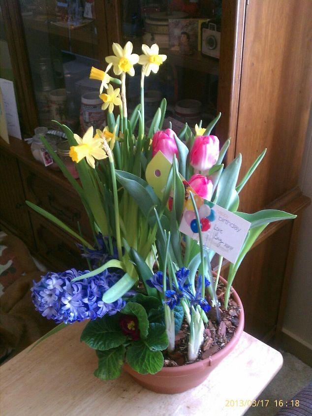 flowers i got for birthday last yr planted them, container gardening, flowers, gardening