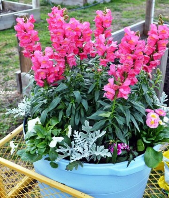 do you wish you had a green thumb, flowers, gardening, You need flowers to attract bees birds and butterflies These helpful insects aid in the pollination and production of flowers
