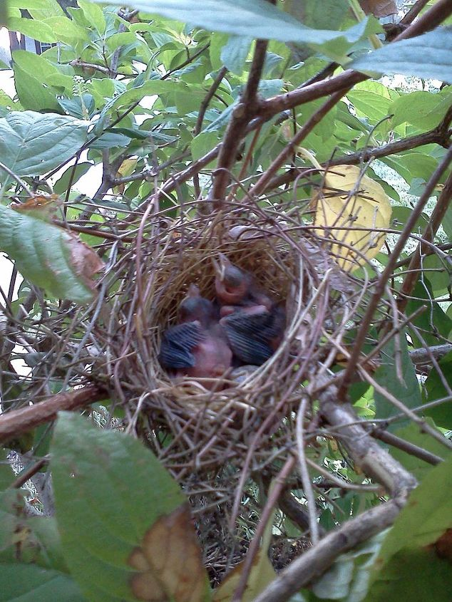 if you lucky you will get to watch with your child,  a baby bird family grow up and fly away