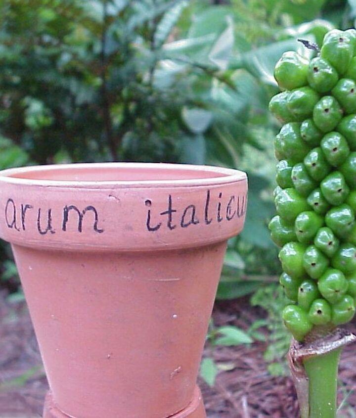 pot label