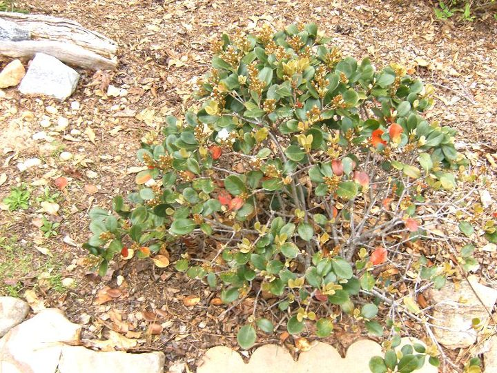 q does anyone know what this plant is, gardening