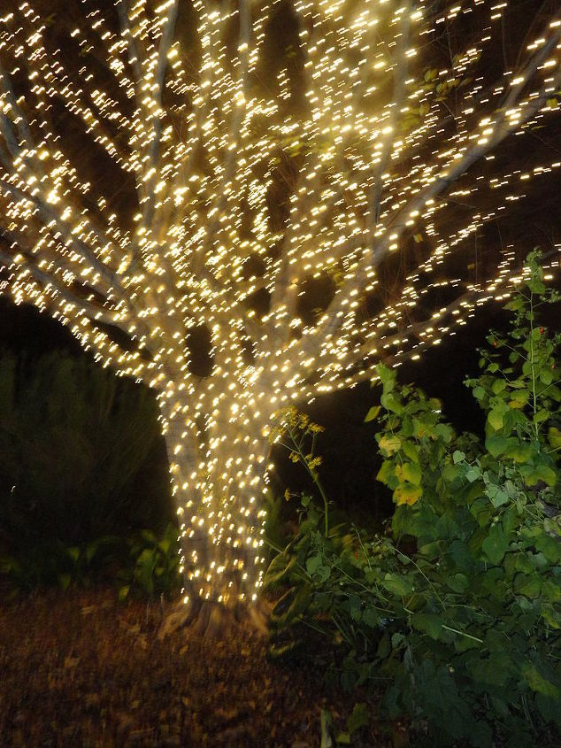 these were taken at atlantaa botanical gardens my first christmas there had to, christmas decorations, seasonal holiday decor