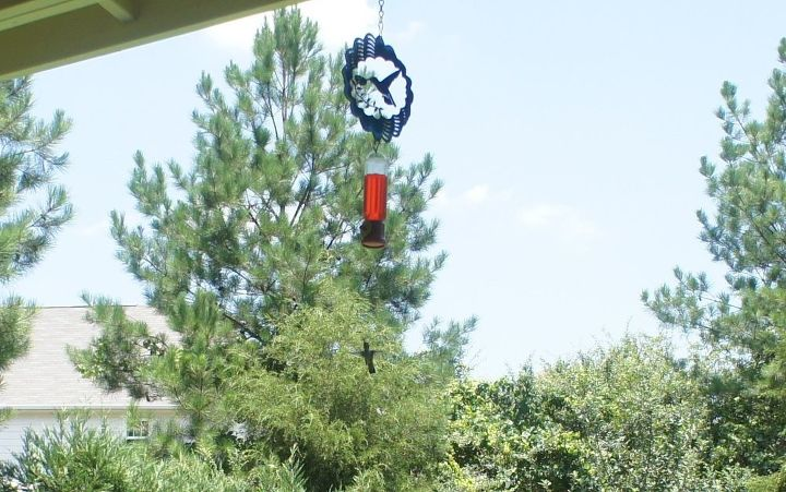 when should i stop feeding the hummingbirds, pets animals
