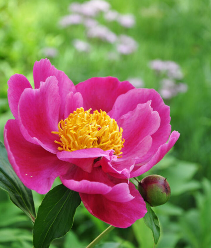 june garden stroll, flowers, gardening
