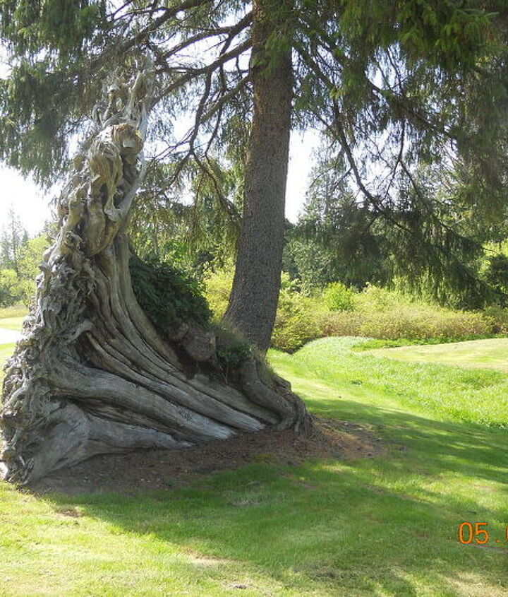 trees at port ludlow golf course wa, landscape