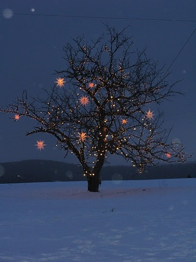 Add a few Moravian stars from Christmas Lights, Etc to a wrapped tree and you have the most beautiful tree on the block!