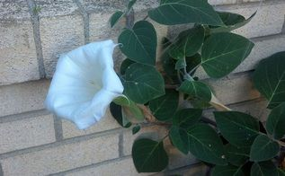 what is this flower bush, flowers, gardening