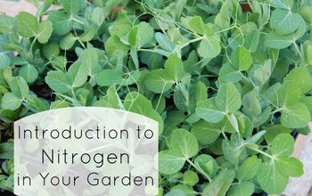 Introduction to Nitrogen in Your Garden