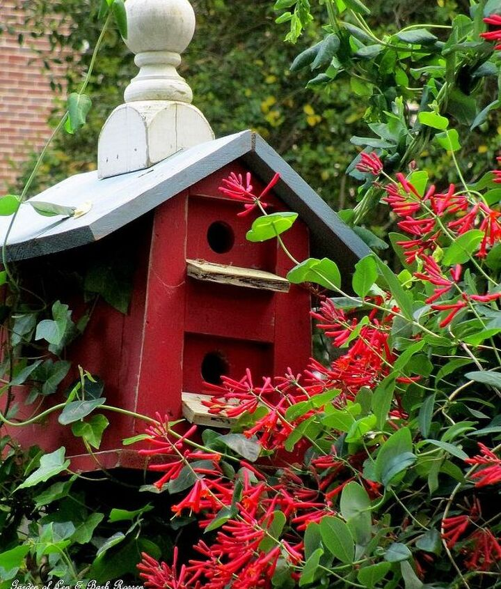 Birdhouse with Lonicera vine