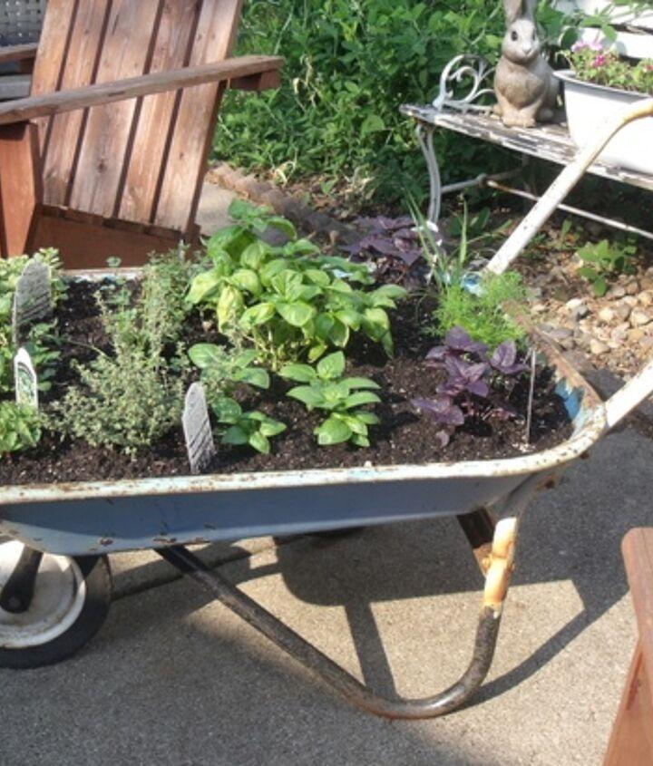 My herb garden planted in a wheelbarrow.