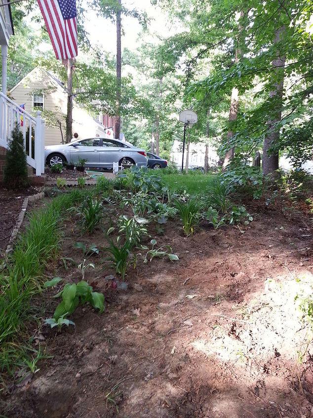 halfway through the client s hillside shade garden, gardening, landscape