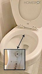 Siphon jets below the rim of the toilet bowl.