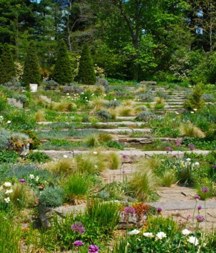 Stone steps on the slope surrounded by early spring bulbs and ornamental grasses.