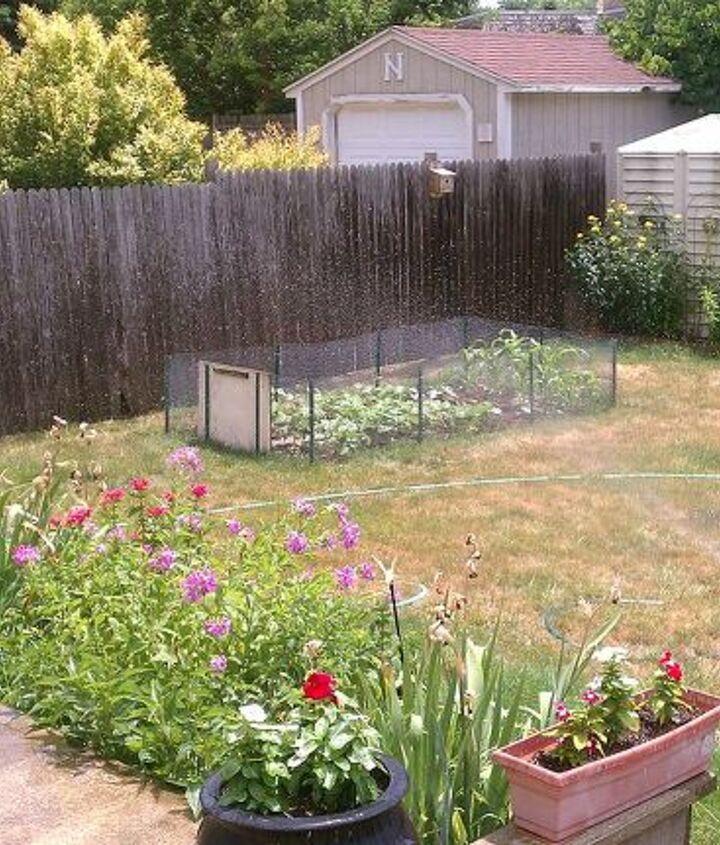 back yard from deck not enough rain this yr, gardening
