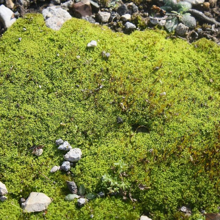 Moss! Something I do not see very often in my very dry and hot little piece of nature.
