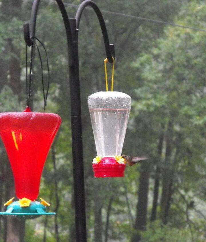 hummingbirds, pets animals