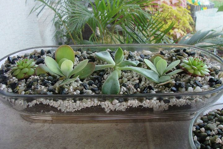 These plants are at home in a crystal bread dish.
