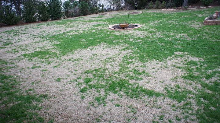 q why is my bermuda grass getting green, gardening