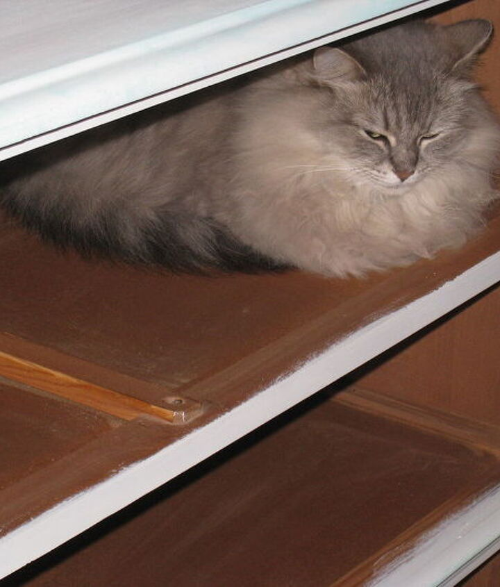 The cat hiding from the dog while I was working on the dresser box.