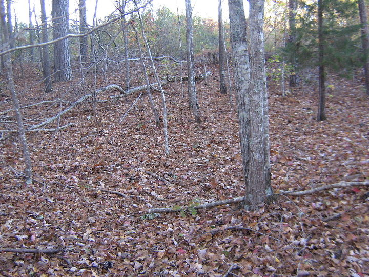 wooded slope needs attention, landscape, Next undertaking Near the north property line where all the lumber was cut and undergrowth is being held back by ME
