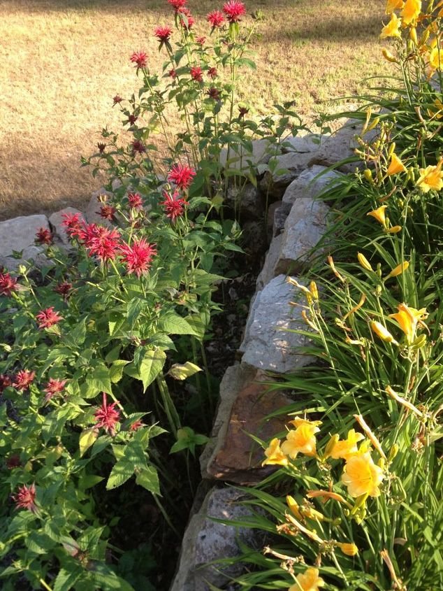 Bee balm and Stella D'oro Lillies