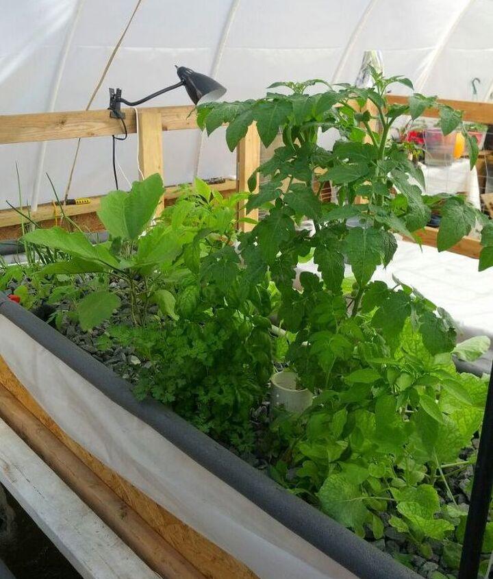 aquaponics, gardening