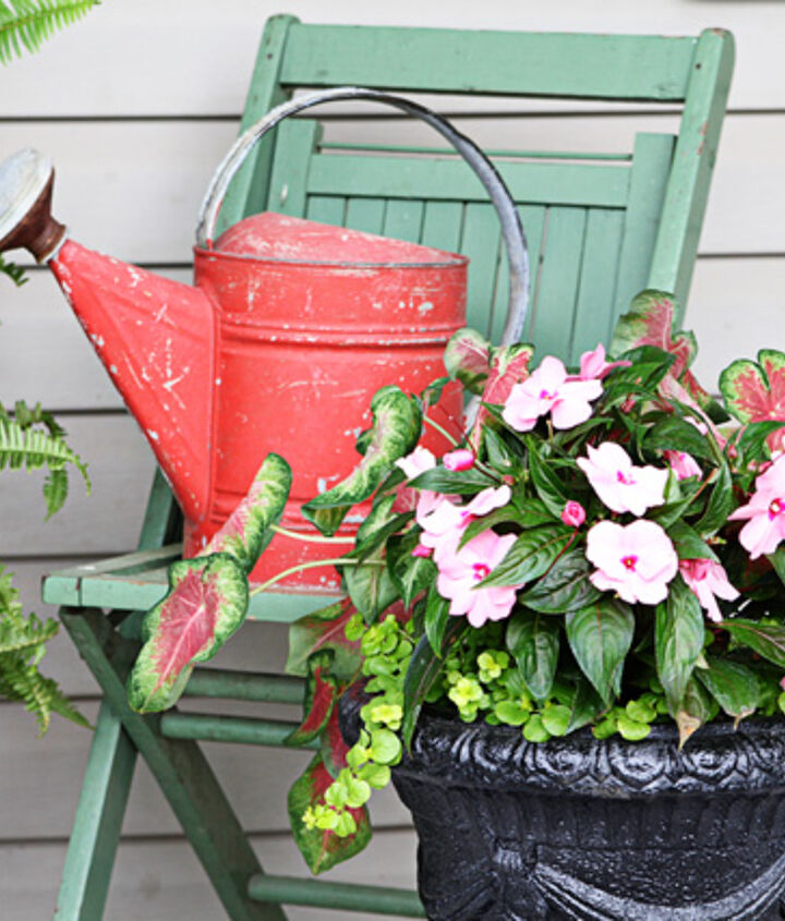 hot to trot patio pot aka tickled pink, gardening
