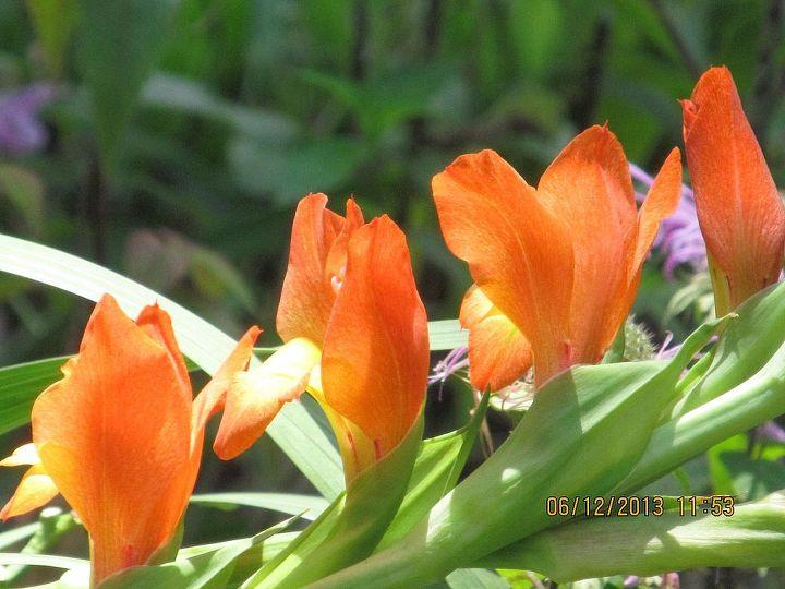 one hot summer day, gardening