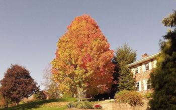 Fall Preventive Maintenance: 7 Tips That Will Protect Your Home