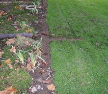 q need ideas for new soggy place, gardening, landscape, Trench DH carved to try and alleviate puddling