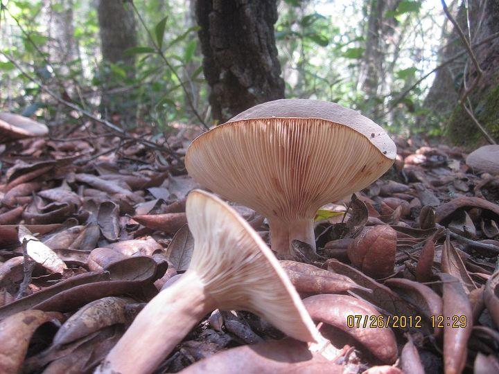mushrooms, gardening