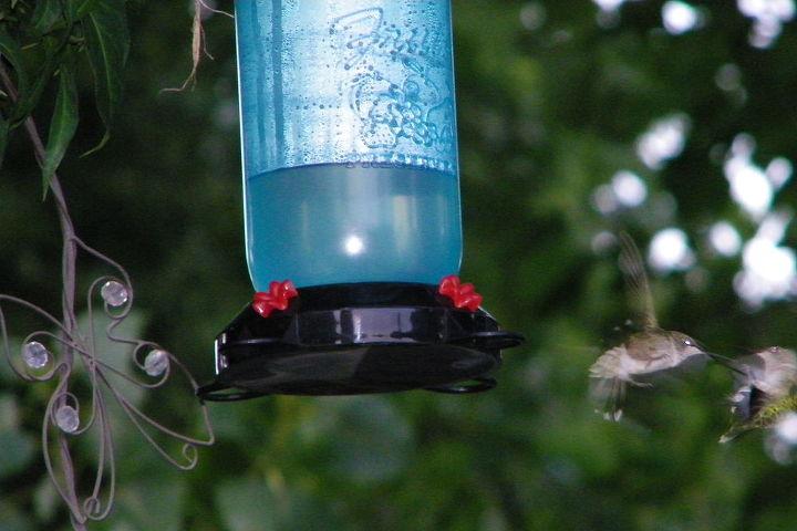 Dueling Hummingbirds
