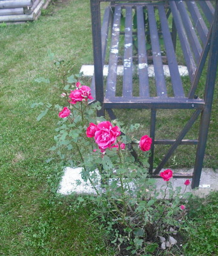 Arbor with bench in front of house and rose bush on side, knockout roses