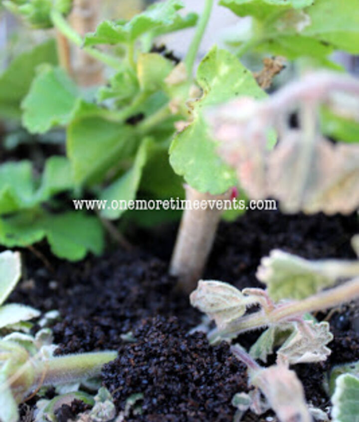 using coffee grounds as a medium and how to take cuttings, gardening
