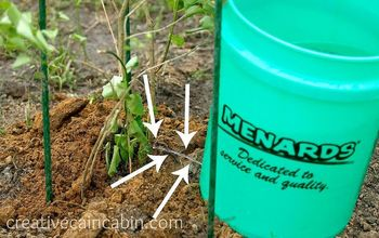 How to Water a Tree for Guaranteed Survival