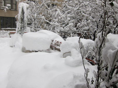 Winter in my urban garden  would ultimately be discussed by one of my kiwis @ http://vimeo.com/user7145610/videos/page:2/sort:date.