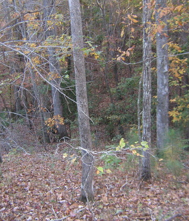 This is the drop-off to the creekbed in the rear of the property.